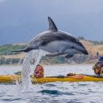 Dolphins-4-
