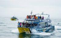 Whale Watch Vessels & Pax
