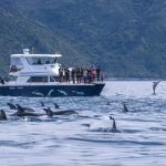 BoatDolphins_049